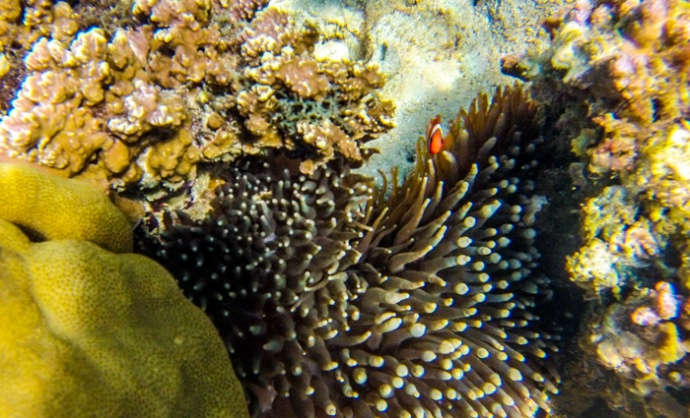 Nemo said hello!