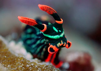 Award-winning pic of a Nudibranch