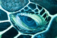 Award-winning pic of a turtle's eye