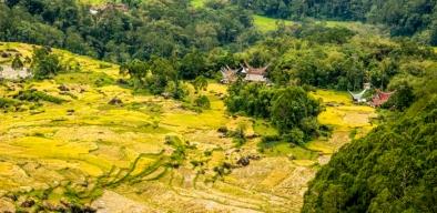 Tanah Toraja-33