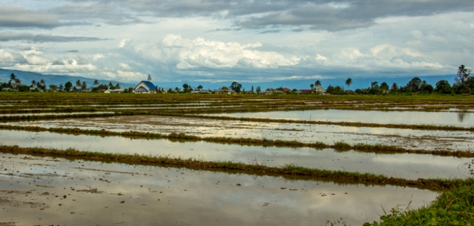 Ricefields and churches ...