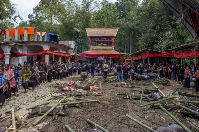 Funeral Ceremony in Tanah Toraja.