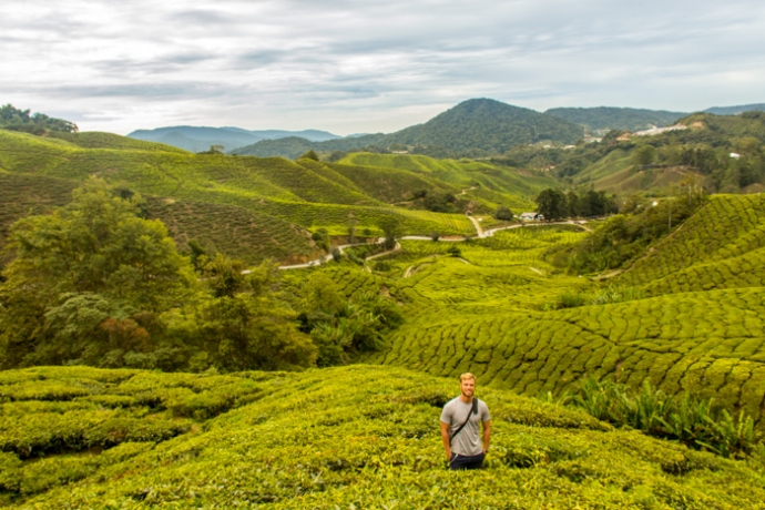 In the tea plantations of the Cameron Highlands.