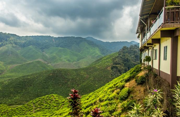 Bharat Tea Plantation ... one of the bigger ones.