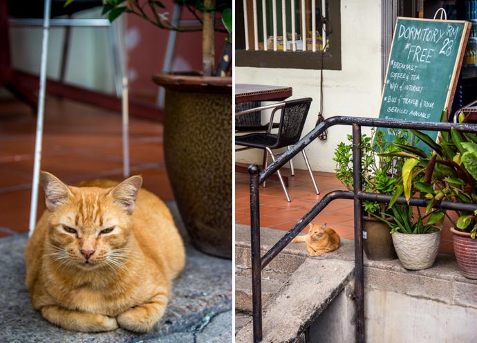 Street Art And Cat Frenzy In Penang Escapologyescapology