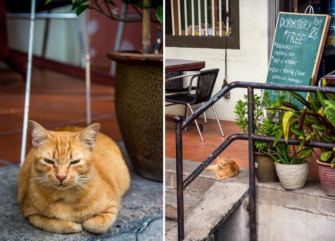 Our little hostel guardian.