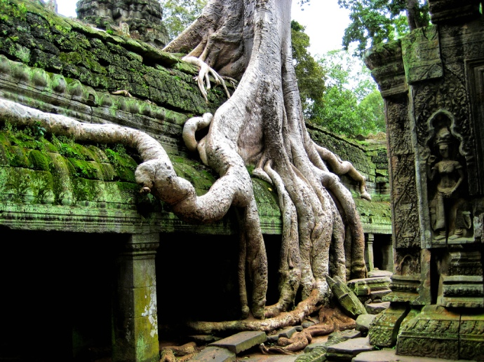 The trees taking what is theirs at Ta Phrom, Angkor