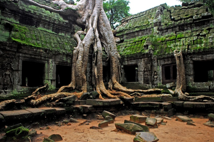 Ta Phrom, Angkor - Tomb Raider