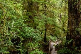 Vancouver island hiking