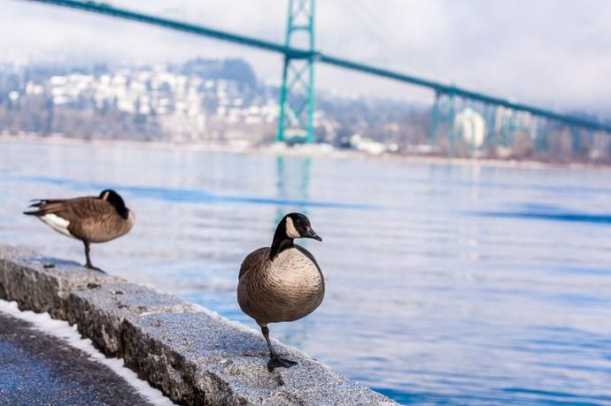 Vancouver Seawall Lions gate Bridge
