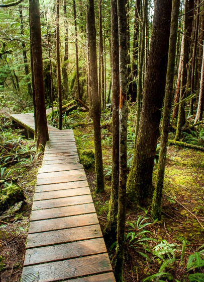Hiking trail tofino